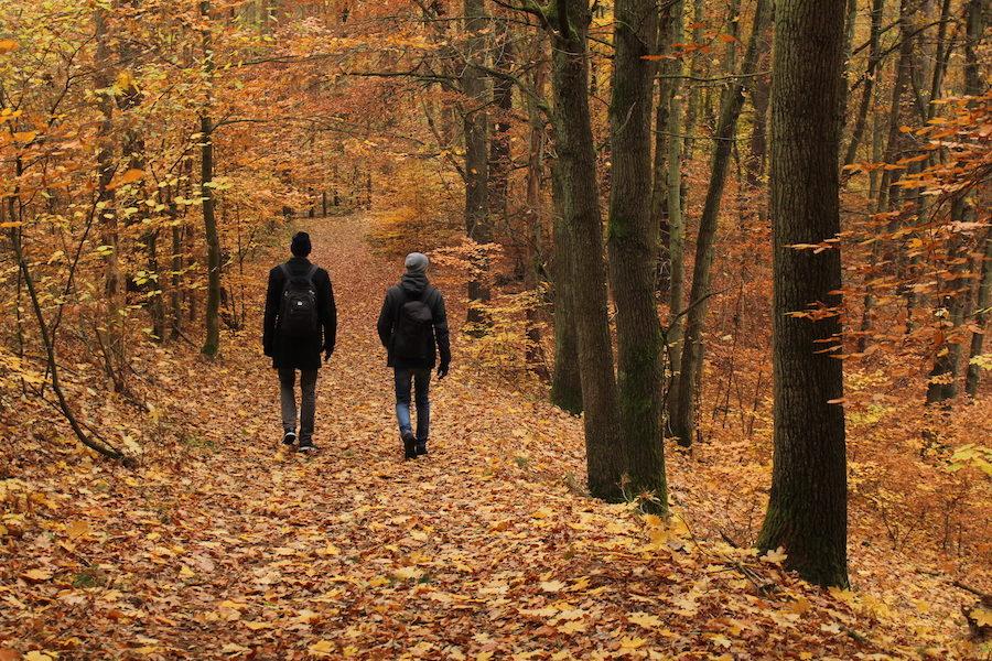 Wanderung von Waldsieversdorf nach Buckow