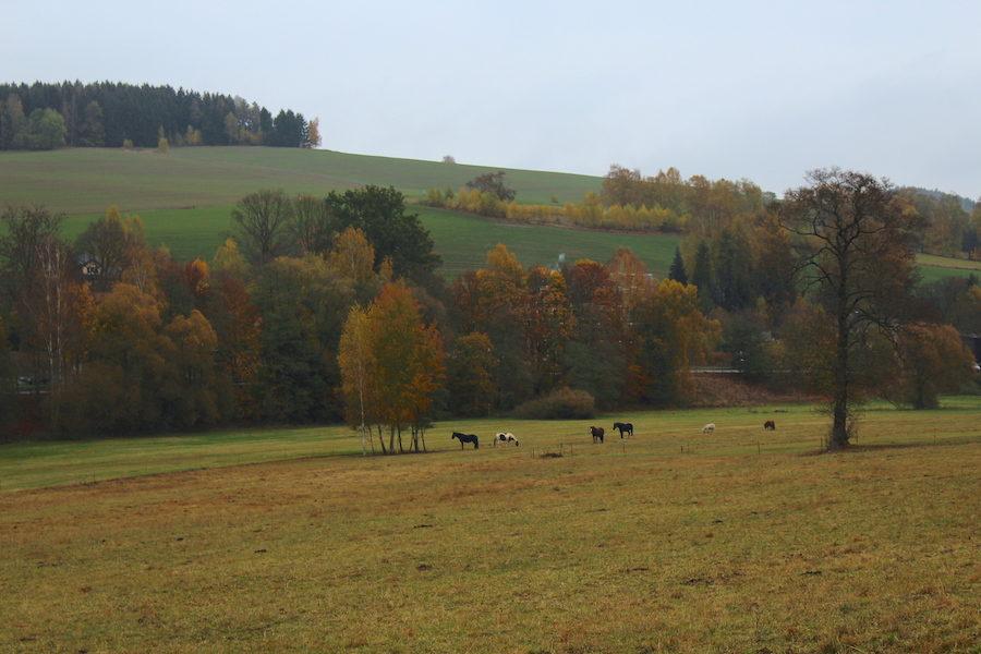 Auf dem Weg von Markneukirchen nach Erlbach