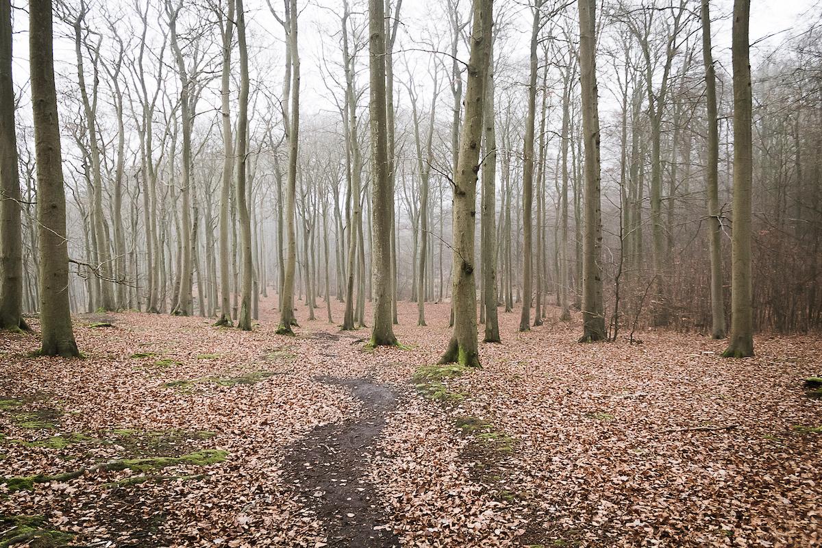 Wanderung durch die Granitz im Winter