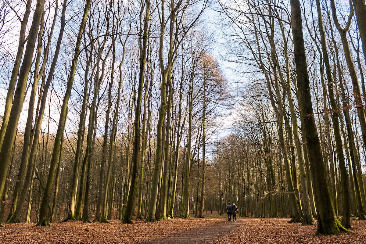 Wanderung durch den Nationalpark Jasmund Ende November