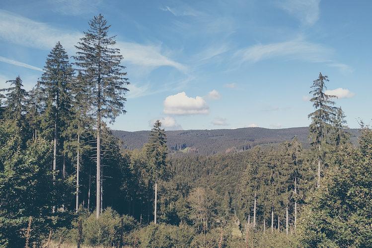 Wald, Wald, Wald. Thüringen.