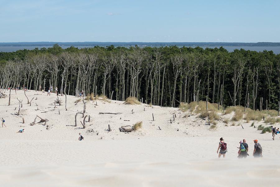 Dünenwanderung in den Wald hinein