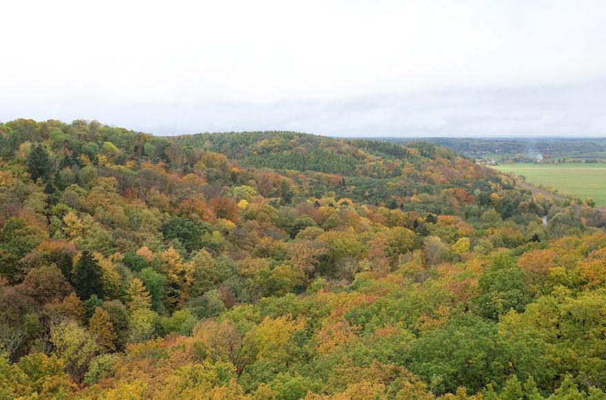 Waldreiche Ausläufer der Barnimer Hochfläche gesehen vom Bismarckturm auf dem Turmwanderweg