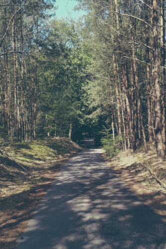 Fahrradweg im Barnim