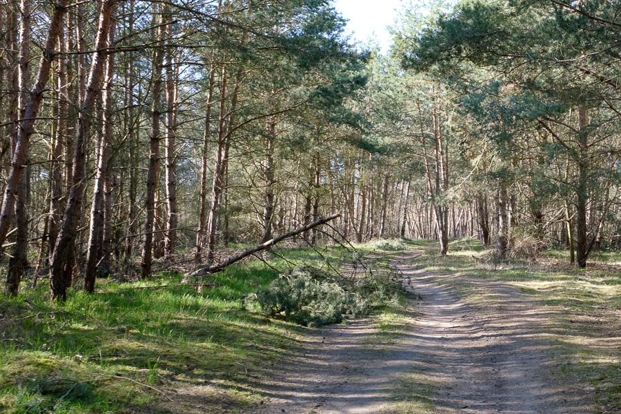 Waldweg in Märkisch-Oderland