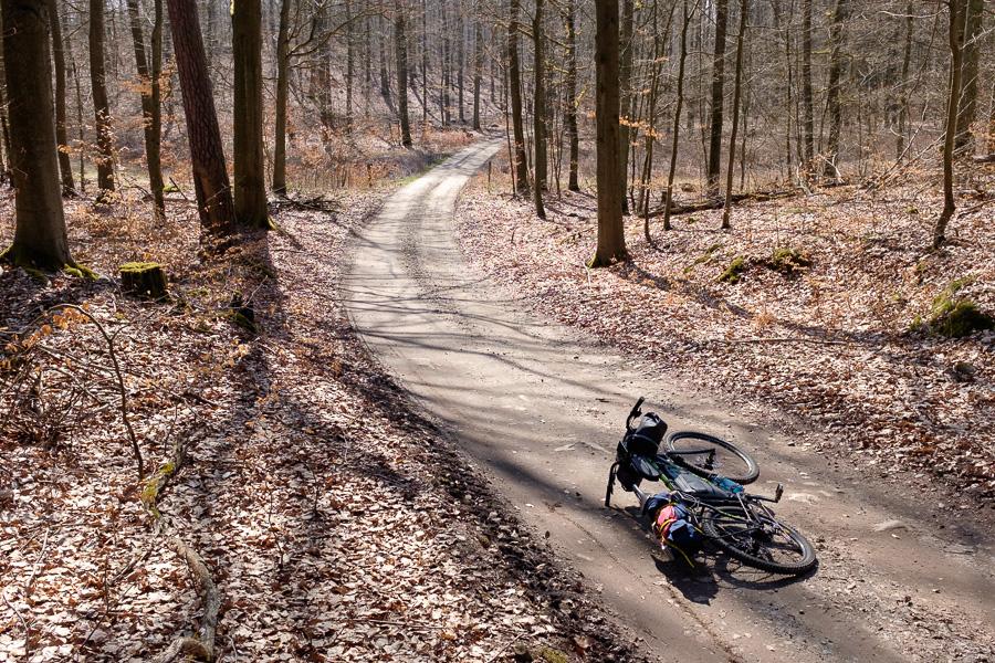 Waldweg durch das NSG Plagefenn