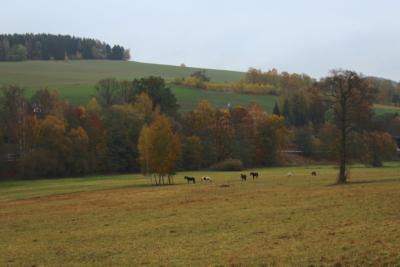 Wanderweg von Markneukirchen nach Erlbach