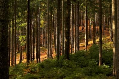 Dichter Wald im Elstergbirge