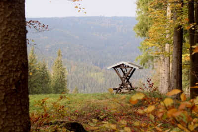 Ein Rastplatz mit Waldblick