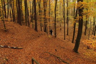 Novemberwanderung auf dem Panaromaweg um den Schermützelsee, Buckow, Brandenburg